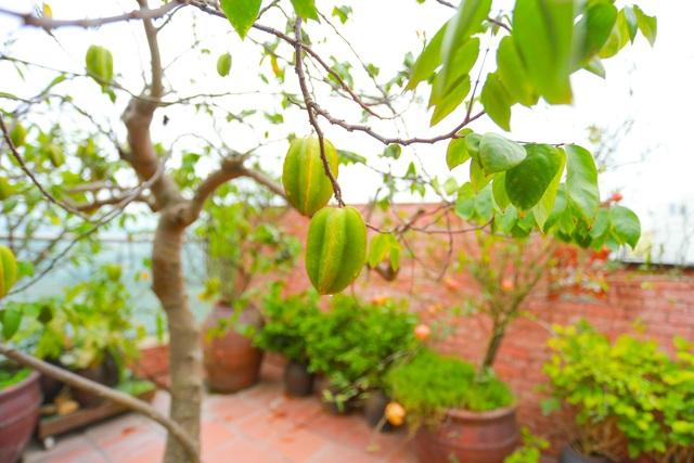 Mê mẩn căn penthouse với khu vườn ngập cây xanh đẹp hiếm có ở Hưng Yên - 16