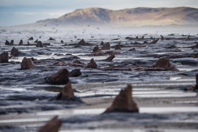 Khu rừng từ thời tiền sử 4500 năm chìm dưới đáy biển - 3