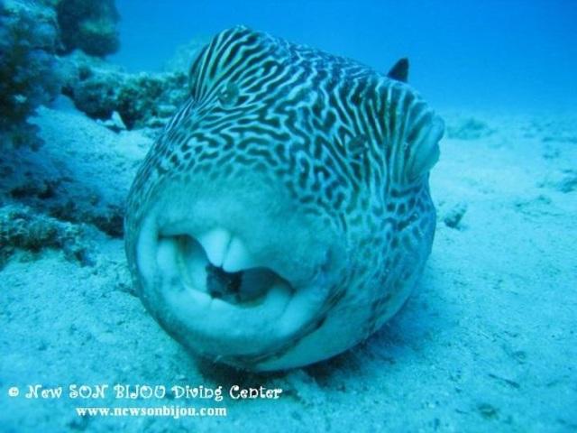 """Loài cá nào có thể nhai đá, """"xử lý"""" 5 tấn đá vôi mỗi năm? - 3"""
