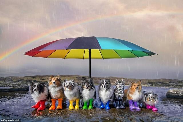 """Nhờ 7 chú chó """"thần tài"""", một hòn đảo hẻo lánh bỗng có tên trên bản đồ du lịch - 8"""