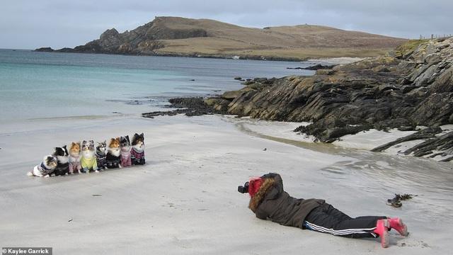 """Nhờ 7 chú chó """"thần tài"""", một hòn đảo hẻo lánh bỗng có tên trên bản đồ du lịch - 2"""