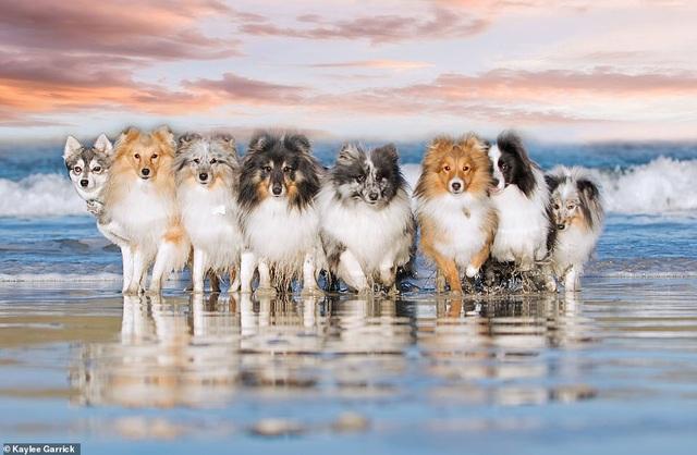 """Nhờ 7 chú chó """"thần tài"""", một hòn đảo hẻo lánh bỗng có tên trên bản đồ du lịch - 11"""