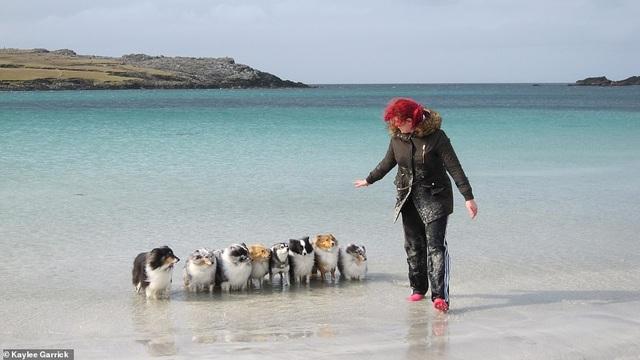 """Nhờ 7 chú chó """"thần tài"""", một hòn đảo hẻo lánh bỗng có tên trên bản đồ du lịch - 3"""