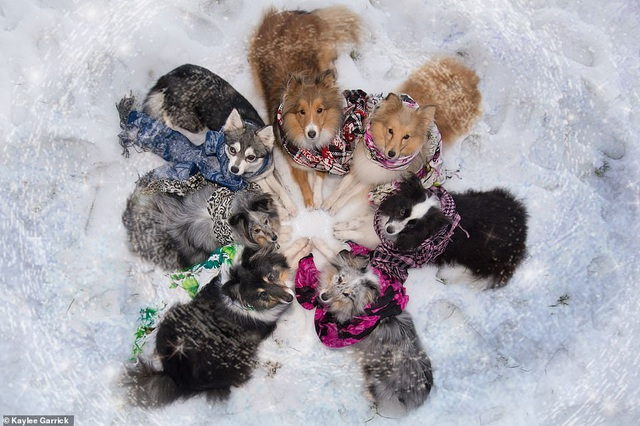 """Nhờ 7 chú chó """"thần tài"""", một hòn đảo hẻo lánh bỗng có tên trên bản đồ du lịch - 6"""