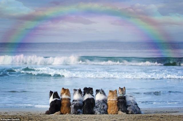 """Nhờ 7 chú chó """"thần tài"""", một hòn đảo hẻo lánh bỗng có tên trên bản đồ du lịch - 10"""