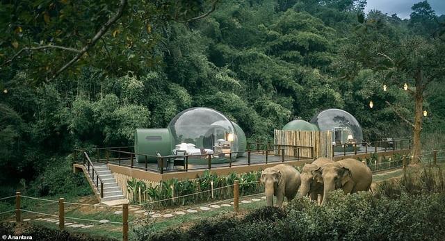 """""""Ngôi nhà bong bóng"""" sang trọng, trong suốt nằm giữa rừng rậm cùng những con voi - 1"""