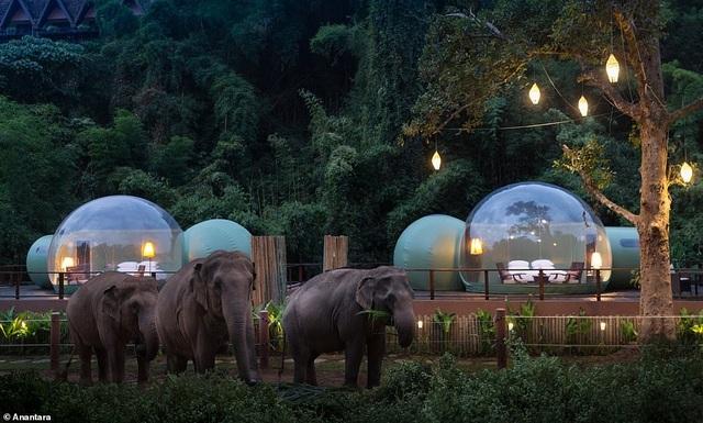 """""""Ngôi nhà bong bóng"""" sang trọng, trong suốt nằm giữa rừng rậm cùng những con voi - 4"""