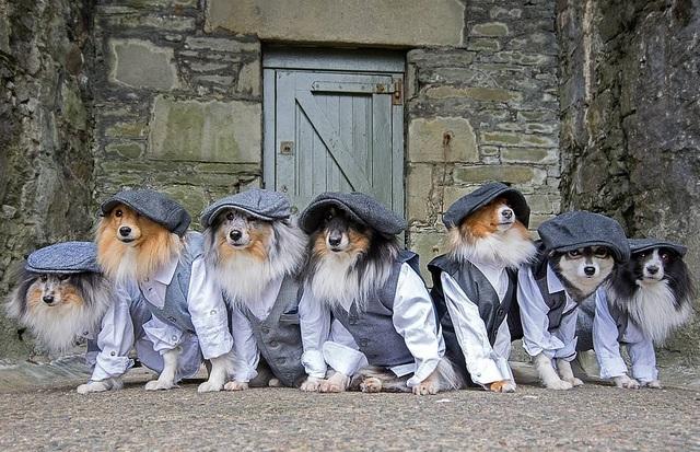 """Nhờ 7 chú chó """"thần tài"""", một hòn đảo hẻo lánh bỗng có tên trên bản đồ du lịch - 4"""