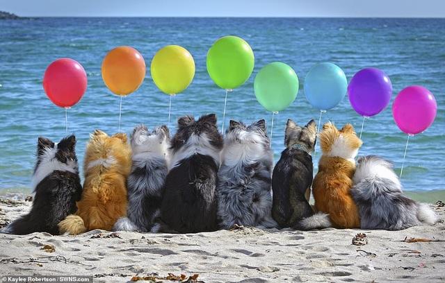 """Nhờ 7 chú chó """"thần tài"""", một hòn đảo hẻo lánh bỗng có tên trên bản đồ du lịch - 9"""