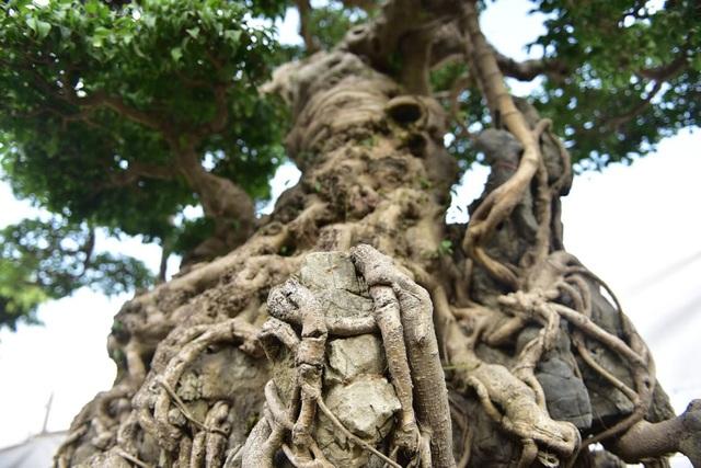 Khách trả 1 triệu USD đổi lấy cây sanh cổ, chủ nhân quyết không bán - 4