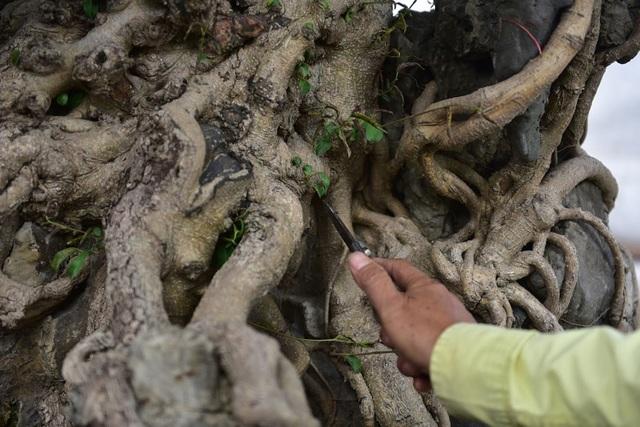 Khách trả 1 triệu USD đổi lấy cây sanh cổ, chủ nhân quyết không bán - 5
