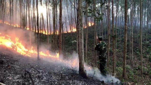 Lãnh 6 năm tù vì gây ra vụ cháy gần 168 ha rừng - 1