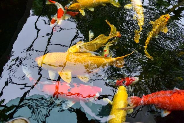 Mãn nhãn biệt thự vườn rộng 100m2 với hồ cá Koi đẳng cấp ở ngoại thành Hà Nội - 7