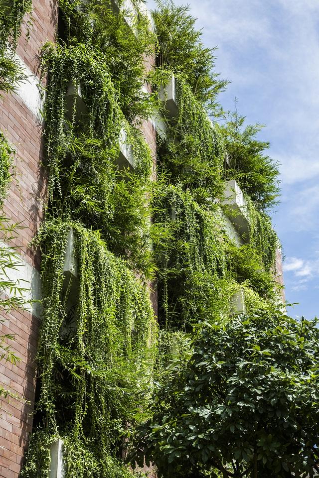 """Tòa nhà 5 tầng """"siêu độc"""" phủ kín cây xanh ở Đà Nẵng, được báo Tây hết lời khen ngợi - 3"""