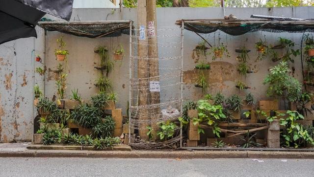 Ngỡ ngàng với khu vườn treo xanh mát được trồng trên bãi rác bốc mùi ở Hà Nội - 1