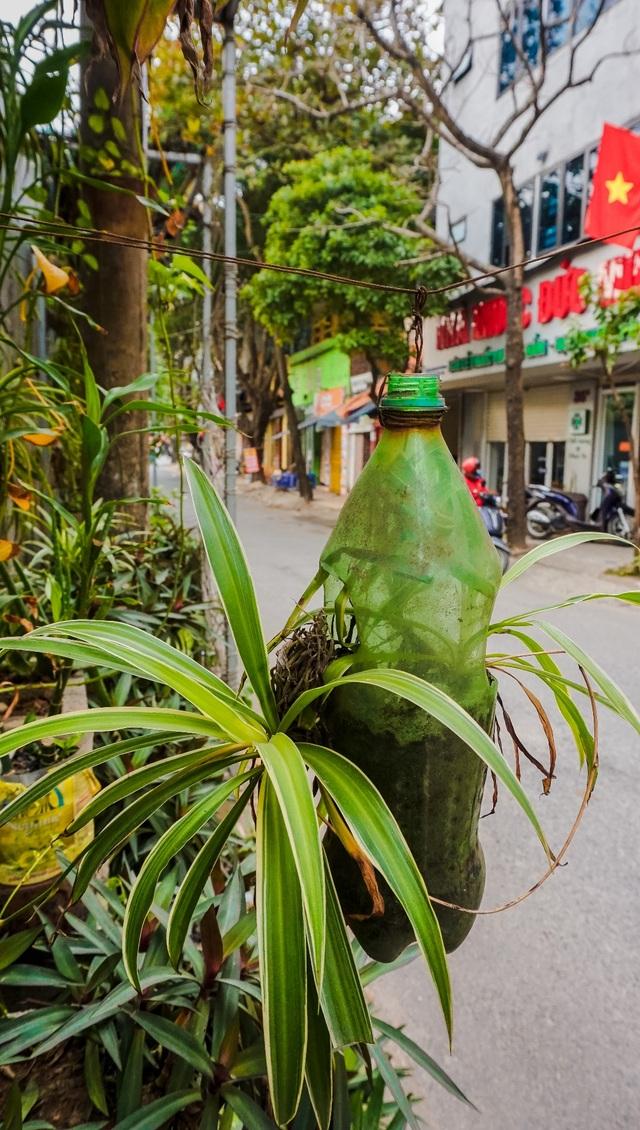 Ngỡ ngàng với khu vườn treo xanh mát được trồng trên bãi rác bốc mùi ở Hà Nội - 3