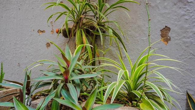 Ngỡ ngàng với khu vườn treo xanh mát được trồng trên bãi rác bốc mùi ở Hà Nội - 4