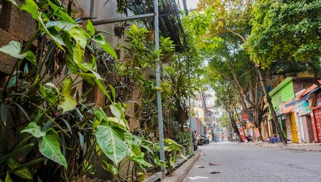 Ngỡ ngàng với khu vườn treo xanh mát được trồng trên bãi rác bốc mùi ở Hà Nội - 5