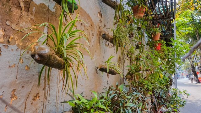 Ngỡ ngàng với khu vườn treo xanh mát được trồng trên bãi rác bốc mùi ở Hà Nội - 6
