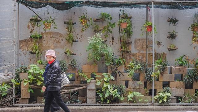 Ngỡ ngàng với khu vườn treo xanh mát được trồng trên bãi rác bốc mùi ở Hà Nội - 7