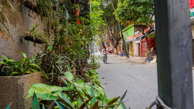 Ngỡ ngàng với khu vườn treo xanh mát được trồng trên bãi rác bốc mùi ở Hà Nội - 8