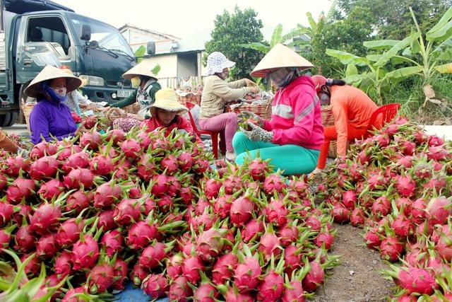 Đại dịch virus corona làm nông sản miền Tây rớt giá thảm hại - 2