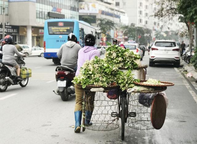 Hoa bưởi xuống phố, khách giành nhau từng chùm - 1