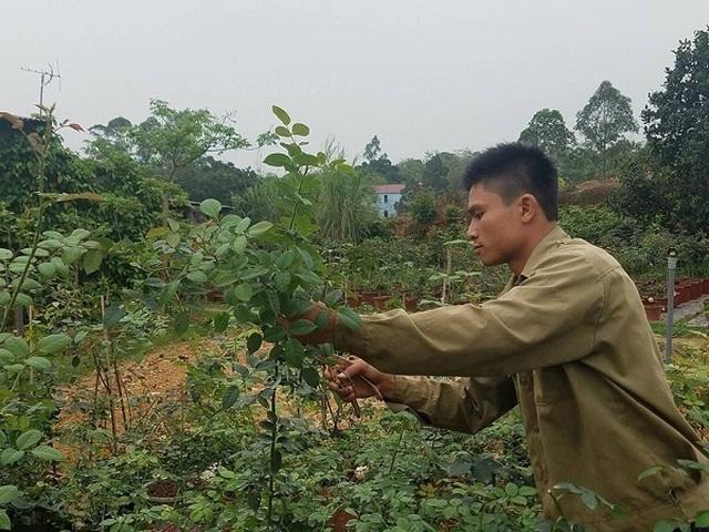 Bỏ việc ở Hà Nội, 8X Phú Thọ về quê trồng vườn hoa hồng khủng - 4