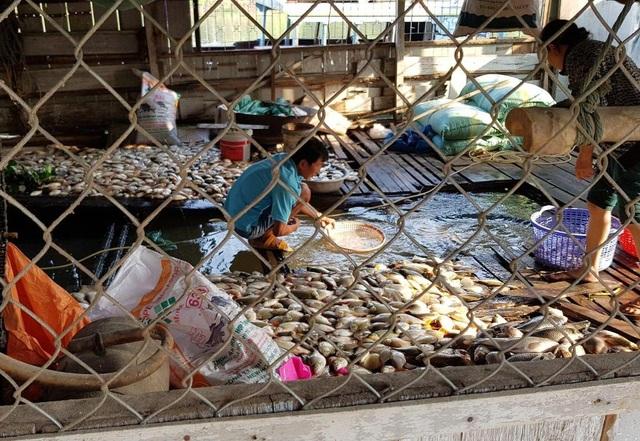 Hàng chục tấn cá nuôi lồng bè chết hàng loạt - 1