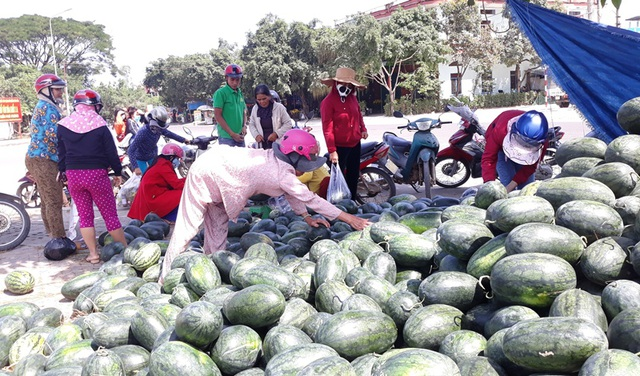 Giá dưa hấu tuột dốc vì corona, người trồng lao đao lo thu hồi vốn - 1