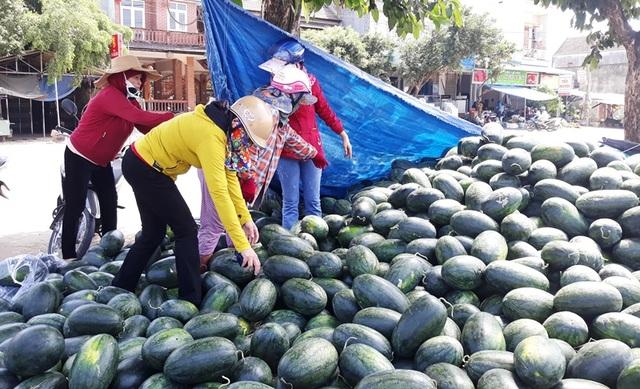 Giá dưa hấu tuột dốc vì corona, người trồng lao đao lo thu hồi vốn - 3