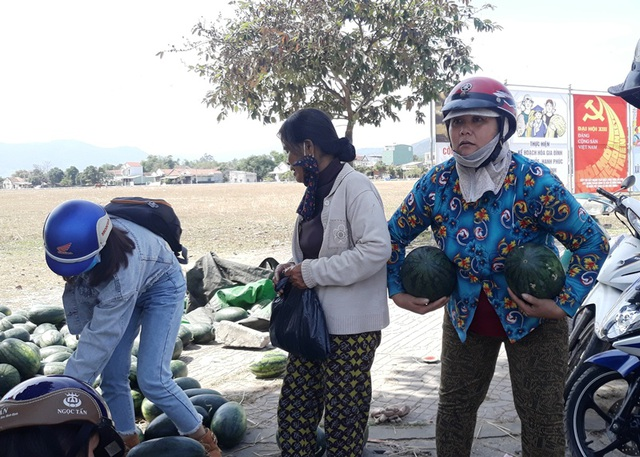 Giá dưa hấu tuột dốc vì corona, người trồng lao đao lo thu hồi vốn - 4