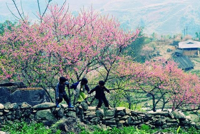 Hoa đào núi Tây Bắc khoe sắc hồng tuyệt đẹp trong nắng xuân - 2