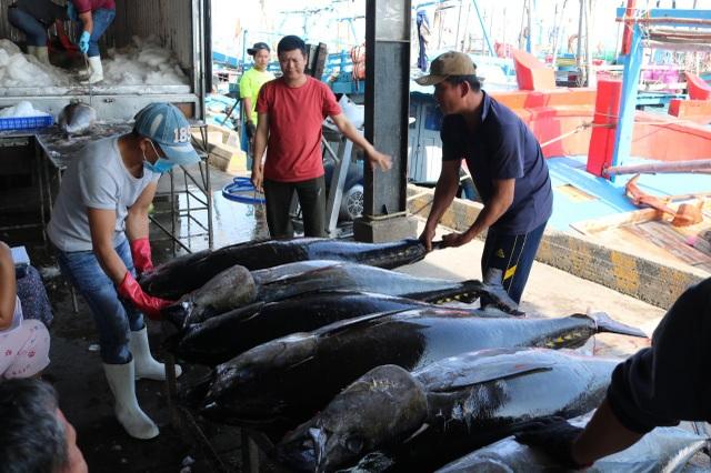 Cá ngừ đại dương mất giá sau Tết nguyên đán, ngư dân khốn đốn - 2