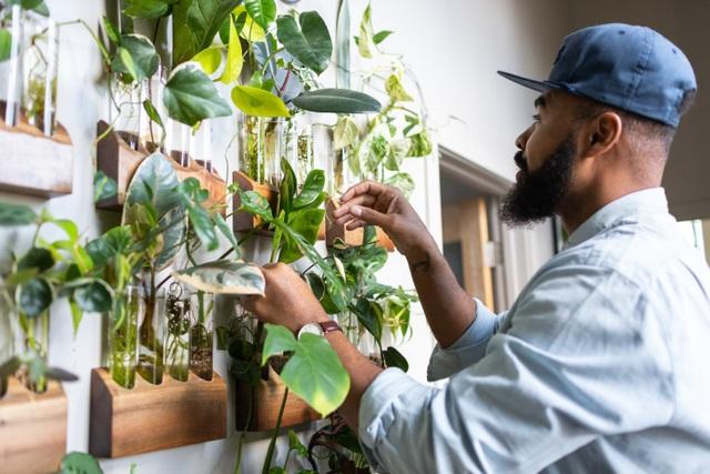 """Bất ngờ ngôi nhà trồng 300 loại cây, đẹp chẳng kém """"rừng Amazon thu nhỏ"""" - 1"""