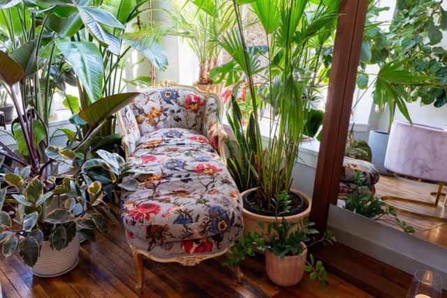 """Bất ngờ ngôi nhà trồng 300 loại cây, đẹp chẳng kém """"rừng Amazon thu nhỏ"""" - 6"""