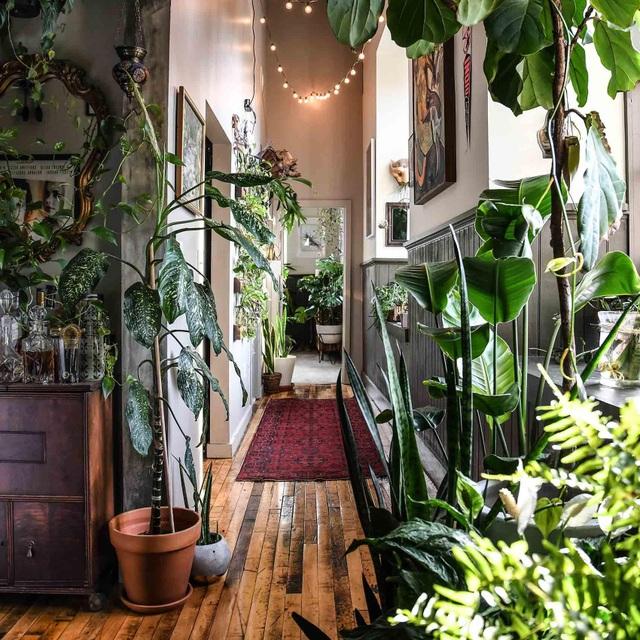 """Bất ngờ ngôi nhà trồng 300 loại cây, đẹp chẳng kém """"rừng Amazon thu nhỏ"""" - 7"""