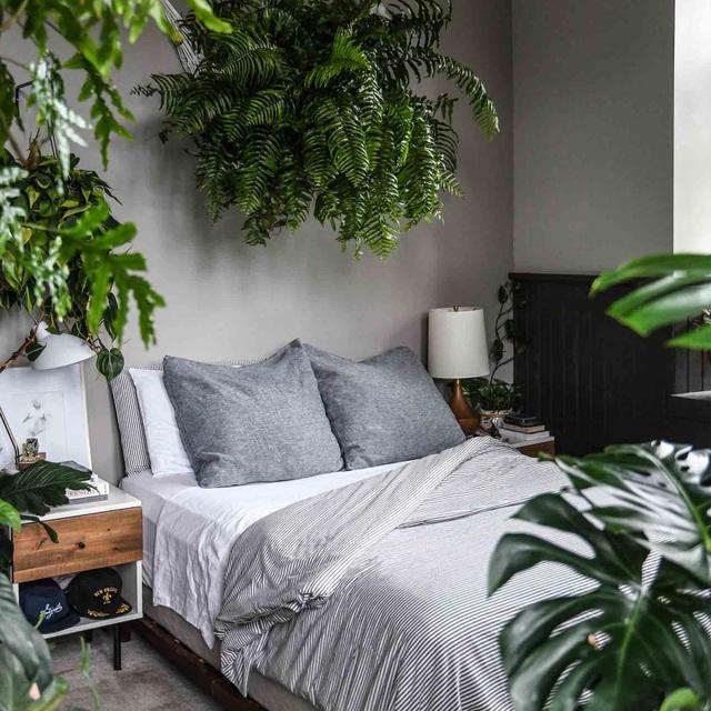 """Bất ngờ ngôi nhà trồng 300 loại cây, đẹp chẳng kém """"rừng Amazon thu nhỏ"""" - 10"""