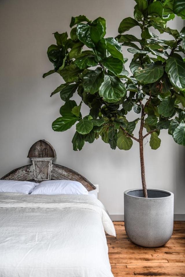 """Bất ngờ ngôi nhà trồng 300 loại cây, đẹp chẳng kém """"rừng Amazon thu nhỏ"""" - 11"""