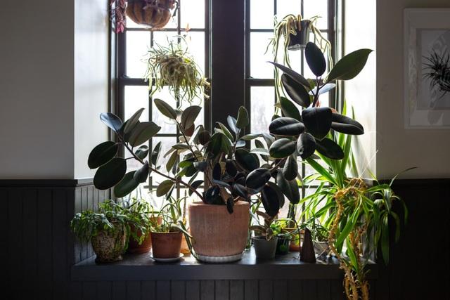"""Bất ngờ ngôi nhà trồng 300 loại cây, đẹp chẳng kém """"rừng Amazon thu nhỏ"""" - 13"""