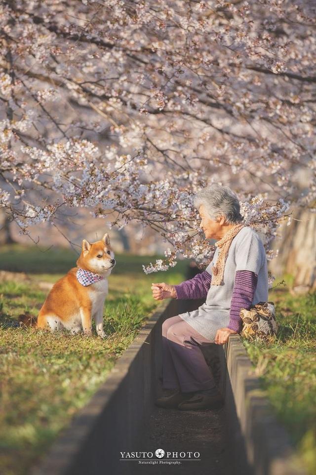 """Gác lại căng thẳng để nhìn ngắm cuộc sống yên bình của """"bà cụ và cún cưng"""" - 13"""