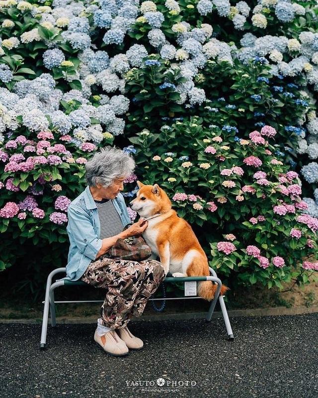 """Gác lại căng thẳng để nhìn ngắm cuộc sống yên bình của """"bà cụ và cún cưng"""" - 10"""