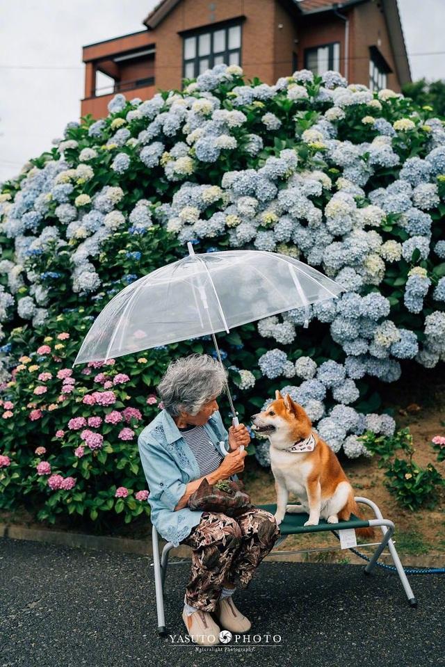 """Gác lại căng thẳng để nhìn ngắm cuộc sống yên bình của """"bà cụ và cún cưng"""" - 4"""