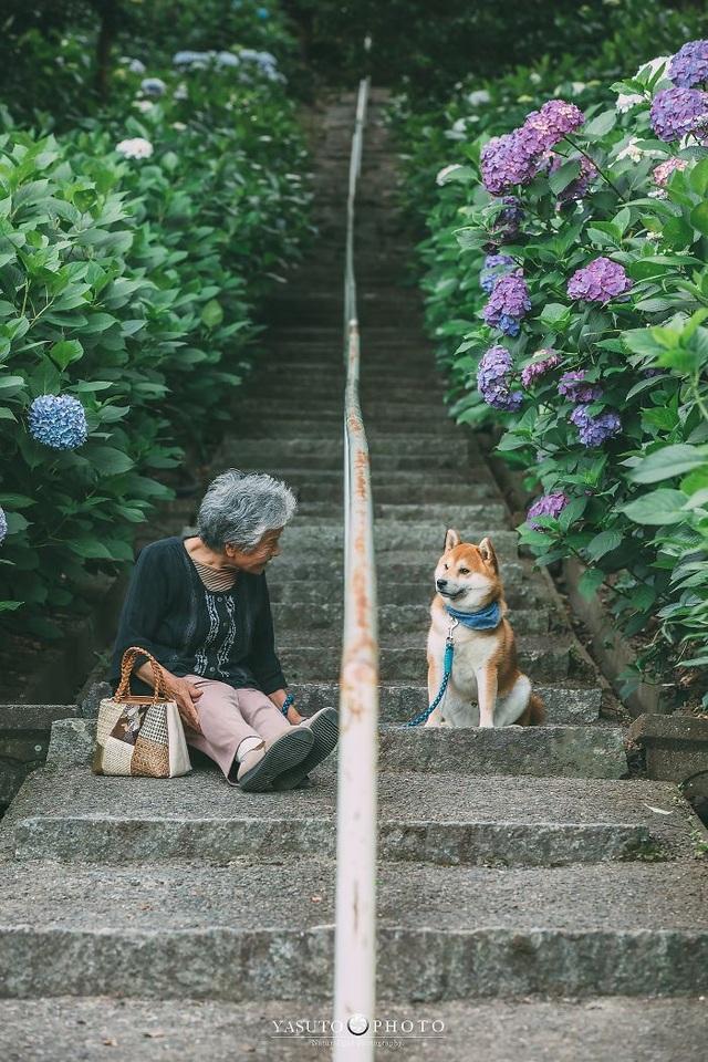 """Gác lại căng thẳng để nhìn ngắm cuộc sống yên bình của """"bà cụ và cún cưng"""" - 6"""