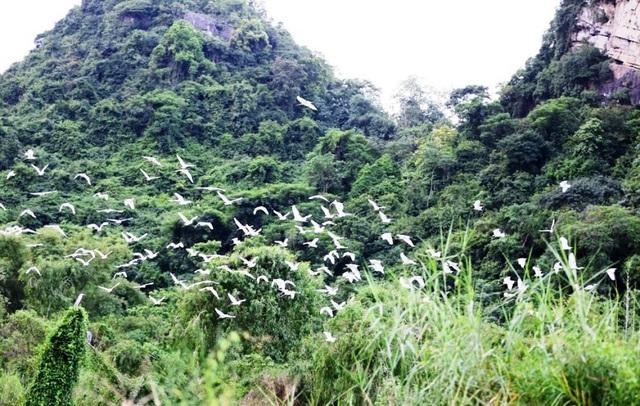 Phượt bộ khám phá vườn chim Thung Nham giữa vùng di sản Tràng An - 14