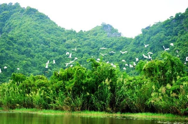 Phượt bộ khám phá vườn chim Thung Nham giữa vùng di sản Tràng An - 2
