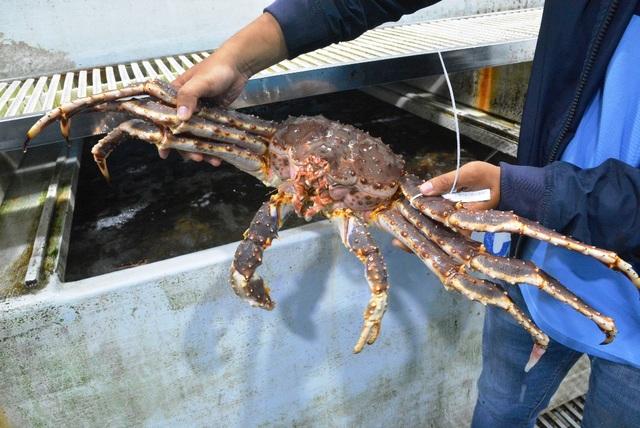 """Dịch corona: Dân buôn hải sản """"điêu đứng"""" vì doanh thu lao dốc - 2"""