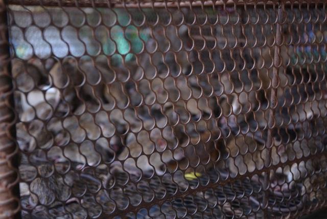 Nhiều tiểu thương chợ động vật hoang dã đóng quầy né đoàn kiểm tra - 6
