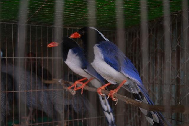 Nhiều tiểu thương chợ động vật hoang dã đóng quầy né đoàn kiểm tra - 7