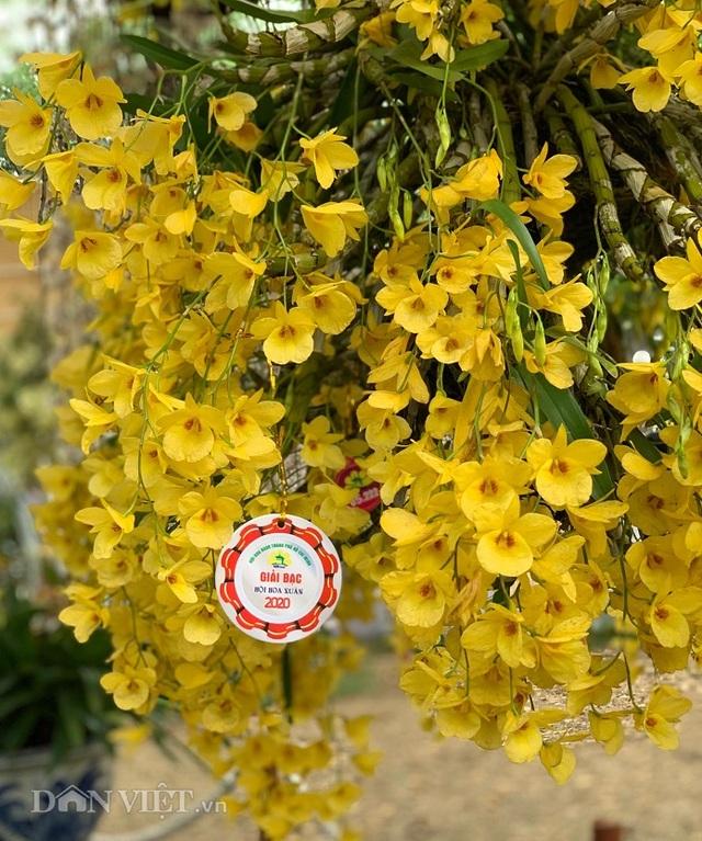 Giàn phong lan giả hạc thanh củi khủng của 9X Lâm Đồng - 8